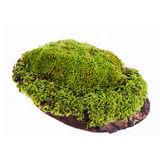 Closeup moss Royalty Free Stock Photos