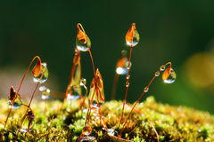 Closeup moss with Sun beams Royalty Free Stock Photo