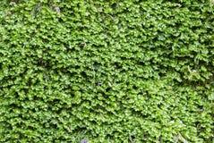 Closeup of moss texture stock photography