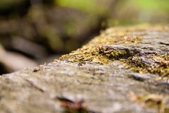 Closeup from mossy stone near stream. A macro vision of a mossy stone near a stream within wild german woods Stock Images