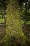 Closeup of mossy tree Royalty Free Stock Photography