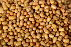 Closeup Of Moth Beans, Indian name Matki Royalty Free Stock Photography