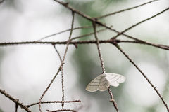 Closeup of moth on branch in forest Royalty Free Stock Photos