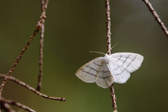 Closeup of moth on branch in forest Stock Photos