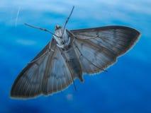 Closeup of moth on window at sea Royalty Free Stock Photo