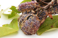 Closeup of mouldy, rotten plums Royalty Free Stock Photo