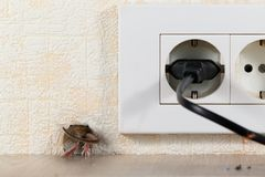 Closeup mouse Mus musculus  climbs into a hole in the wall Royalty Free Stock Photos