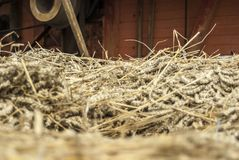 Closeup of mown wheat on a cart in front of historical thresher Stock Photography