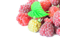Closeup of multiple raspberries isolated on white background Royalty Free Stock Photos