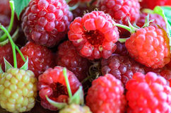 Closeup of multiple raspberries Royalty Free Stock Photo