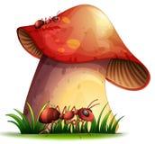 Closeup mushroom Stock Photo