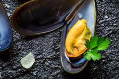 Closeup of mussels served with garlic and parsley Stock Photography
