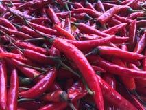 Closeup några röda chili blandade för Thaifood royaltyfri fotografi