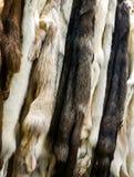 Arctic fox furs. Closeup of the natural arctic fox furs stock photography