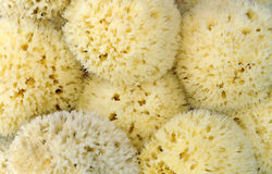 Closeup of natural sea sponges Stock Photography