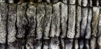 Silver fox furs. Closeup of the natural silver fox furs royalty free stock images