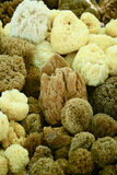 Closeup of a natural sponges Stock Image