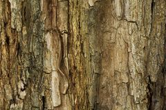 Closeup of natural tree bark texture stock images