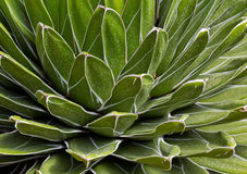 Closeup Nature Background. Details and Patterns of Green Hard Leafs Stock Images