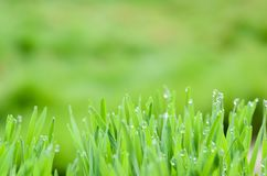 Closeup nature view and abstract Bokeh of green leaf on blurred green background stock photos