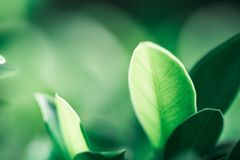 Closeup nature view of dark green leaf on sunlight Stock Image