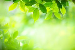 Closeup nature view of green leaf on blurred background in selective focus royalty free stock photos