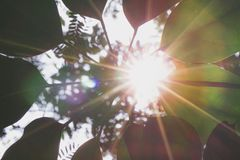 Leaves on green nature. royalty free stock photo