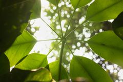 Leaves on green nature. stock photos