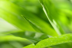 Close Up nature view of green leaf and green natural background royalty free stock photo