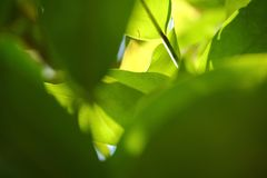Closeup nature view of green leaf in garden stock photo