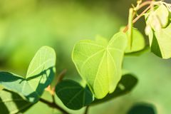 Closeup nature view of green leaf texture on blurred background Stock Photos