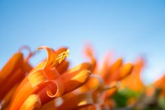 Closeup nature view of orange flower. Abstract blurred beautiful flower used for background or wallpaper Stock Photo
