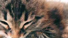 New born baby kitten sleeping under the sunlight. Closeup of a new born tabby cat face sleeping under the sunlight stock video
