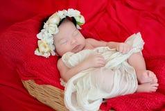 Newborn baby girl is sleeping on red fabric blanket stock photography