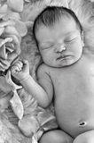 Closeup of newborn baby sleeping next to roses in black and white Royalty Free Stock Photo