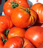 Closeup with nice big delicious tomatoes Stock Images
