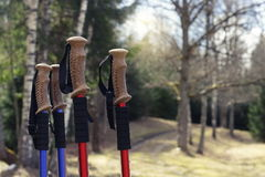 Closeup of Nordic walking poles handles, on forest trails background Stock Images