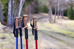 Closeup of Nordic walking poles handles, on forest trails background Royalty Free Stock Images
