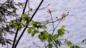 Closeup of a northern lake stock video footage
