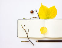 Closeup of notebook and pencil, decorated with autumn yellow leaves and branches. Top view, flat lay Stock Image