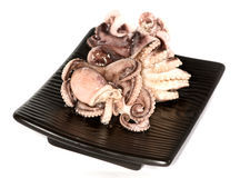 Closeup of octopus Stock Photos