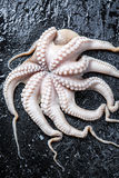 Closeup of octopus on rock Royalty Free Stock Photos