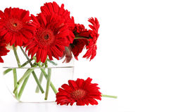 Closeup od red gerber daisies in vase Stock Photo