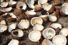 Closeup Of Coconut Drying Royalty Free Stock Image