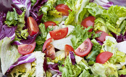 Free Closeup Of Mixed Lettuce Salad Royalty Free Stock Photos - 28394328