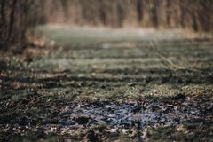 Closeup Of Muddy And Dirty Ground In A Field With An Out Of Focus Background Stock Image