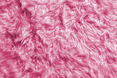Free Closeup Of Natural Soft Romantic Pastel Pink Animal Fluffy Fur Wool Texture For Luxury Furniture Material Or Background Text Stock Photos - 84971563
