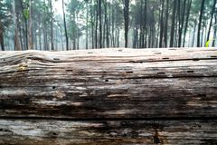 Free Closeup Of Pine Tree Log Lying On The Ground With Pine Tree Forest As Background. 2 Stock Images - 143595914