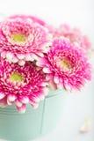 Closeup Of Pink Gerbera Flowers In A Pot Stock Images