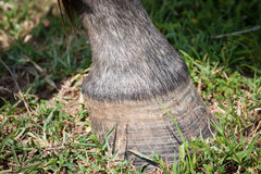 Free Closeup Of The Hoof Of A Horse Stock Image - 22280891